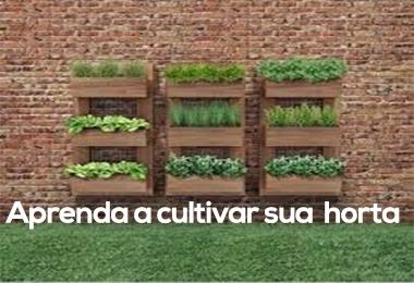 Aprenda a cultivar sua própria horta e coma de forma saudável